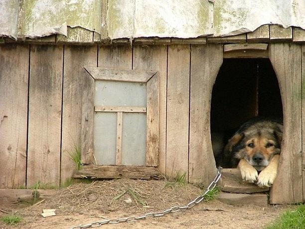 Kaimuose šuns, būdos ir grandinės trio yra kone tradicija, kurios neretai nenorima atsisakyti.