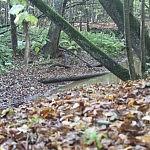 Dovilė Selickaitė. Kalvotas miškas geba paslėpti elnius nuo svetimų akių