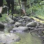 Akmenuotas dugnas verčia stebėtis upės grožiu. Autorė D. Selickaitė