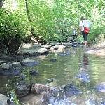 Gausėjantis ir lėtėjantis vanduo, tai ženkloas jog šalia gyvena bebrai. Autorė D. Selickaitė