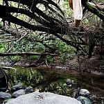 Žuvintės upelės vaga pasakiškai apklostyta miško virtuolių. Autorė G. Aleksandravičiūtė