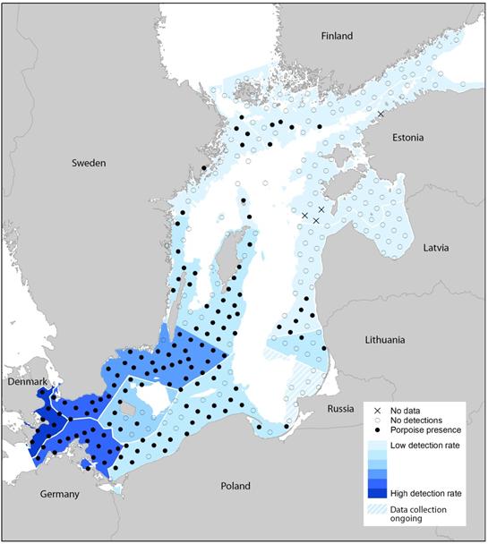 SAMBAH projekto akustiniais radarais užfiksuotos jūrų kiaulių 2011-2013 metais aplankytos vietos (šaltinis: www.sambah.org)
