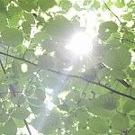 Diena saulėta, karšta, tačiau einant upelio krantu maloniai vėsu. Nuotraukos autorius Bertas Ulozevičius