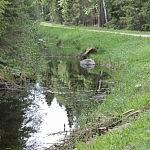 Dovilė Selickaitė. Kaikuriuose šalia kelio esančiuose kanaluose gausu vandens