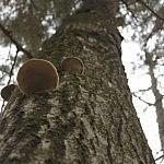Dovilė Selickaitė. Medžio grybai