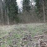 Dovilė Selickaitė. Miško kelias