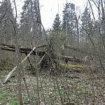 Dovilė Selickaitė. Vėtrų palaužti medžiai