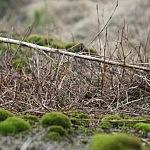Dovilės Selickaitės nuotrauka. Aviečių kilimas
