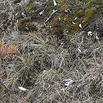 Dovilės Selickaitės nuotrauka. Sudraskyto paukščio liekanos