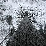 Drebulė