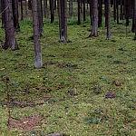 Giedrės Aleksandravičiūtės nuotrauka. Miško paklotė