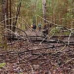 Giedrė Aleksandravičiūtė miško takas