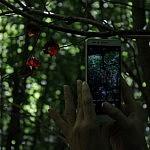 Limšių nuo saulės kaitros saugo medžiai. Nuotraukos autorius Bertas Ulozevičius