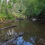 Limšiaus upelis. Nuotraukos autorius Vaidas Balys