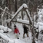 Nuotraukos autorius J. Ivanauskas sniegu apklotas miškas