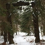 Tadas Petrikas. Žaltės slėnio vartai