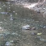 Tyra upelio tėkmė