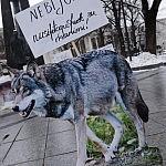 Vilkai kalba pikete V. Kudirkos aikštėje
