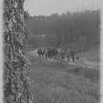 Zervynų kaimo takais
