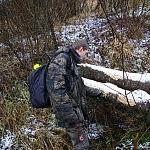 briedžių apgraužtas medis Dalia_Janušauskaitė