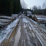 kertamas miškas Dalia_Janušauskaitė