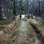 miško keliukas Rimas_Pakeris