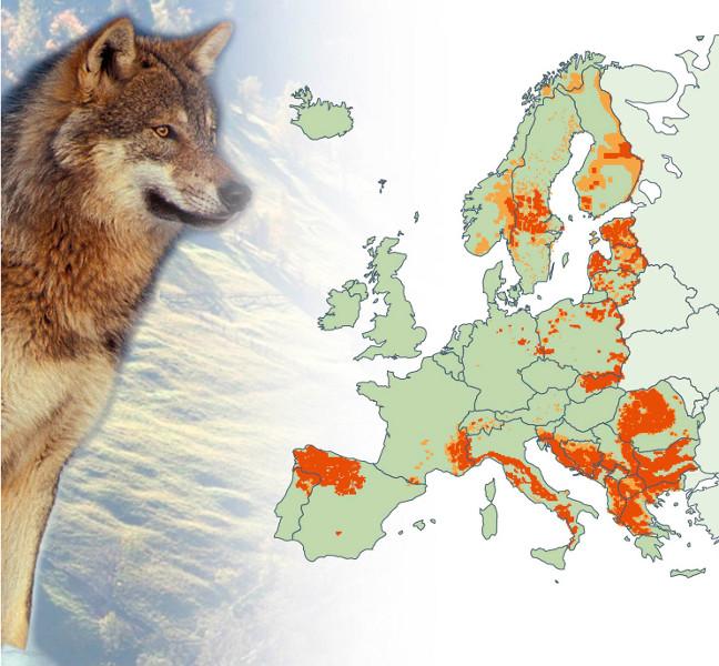 Vilkų paplitimas Europoje