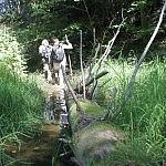 Augalais gausus upės užutekis. Autorė D. Selickaitė