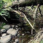 Virtuolių, akmenų ir upės sraunumos darna. Autorė G. Aleksandravičiūtė