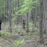 Bertas Ulozevičius. Žmogus ir miškas