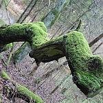 Žiemą žaliuojantis medis