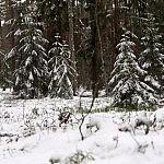 Giedrė Aleksandravičiūtė. Miške dar gausu sniego. Tačiau jis sparčiai tirpsta