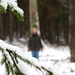 Giedrė Aleksandravičiūtė. Žmogus ir miškas