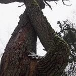 Giedrė Aleksandravičiūtė. Medžio kilpa