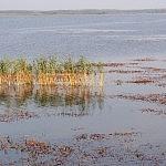 Giedrė Aleksandravičiūtė .Siemianuvkos ežeras