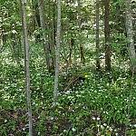 Giedrė Aleksandravičiūtė. Miško pieva