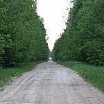 Giedrė Aleksandravičiūtė. Stirna