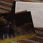 Atvirukas su V. Paškevičiaus nuotrauka.