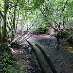 Limšiaus upelis. Nuotraukos autorius Rimas Pakeris