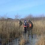 Papės ežero nendrynai. Nuotraukos autorius T. Petrikas