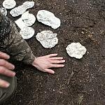 Rimo Pakerio nuotrauka. Pasakojama apie pėdsakų struktūrą.