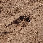 Vilko pėsakai